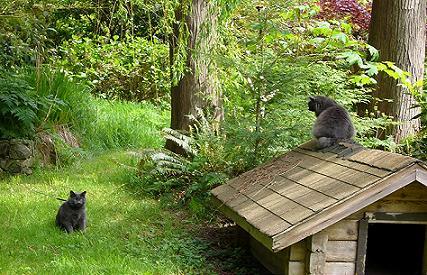 pin pin gatti animali gattini sfondo bianco foto sfondi